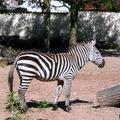 Zebra Vivarium