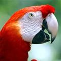 Papagei - Bild: Flickr-User @Doug88888