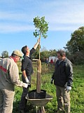 Apfelbäume auf dem Hofgut Oberfeld / Bild: HEAG Südhessische Energie AG (HSE)