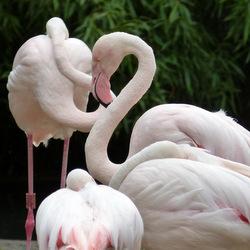Flamingos Vivarium