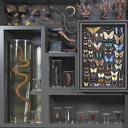 Hessisches Landesmuseum Darmstadt (HLMD) Zoologie - Foto: Wolfgang Fuhrmannek, HLMD