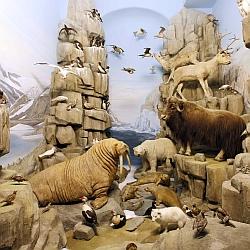 Arktis Diorama / Bild: Hessisches Landesmuseum Darmstadt