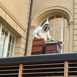 Eberbiene-Imker bei der Arbeit © Eberbiene