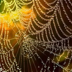 Spinnennetz