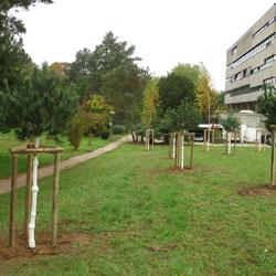 Baumersatzpflanzung / Bild: Dezernat IV/TU Darmstadt