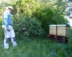 Bienen / Bild: ENTEGA AG